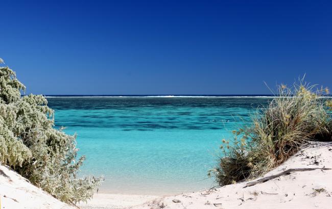 Rafa Ningaloo ma 260 km długości! Jest jedyną wielką rafą znajdującą się tak blisko brzegu.