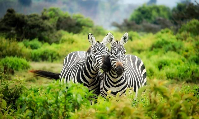 Egzotyczna podróż – Kenia czy Tajlandia?